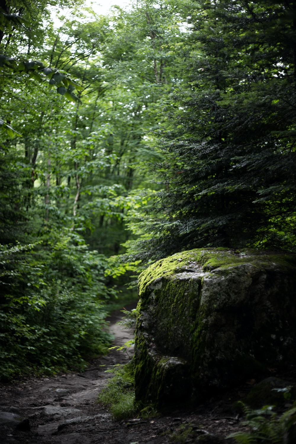 green trees in forest