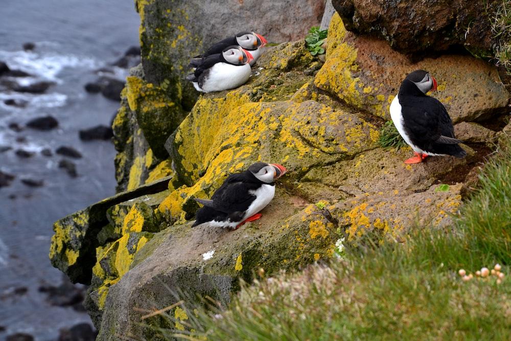 flock of bird standing on stone