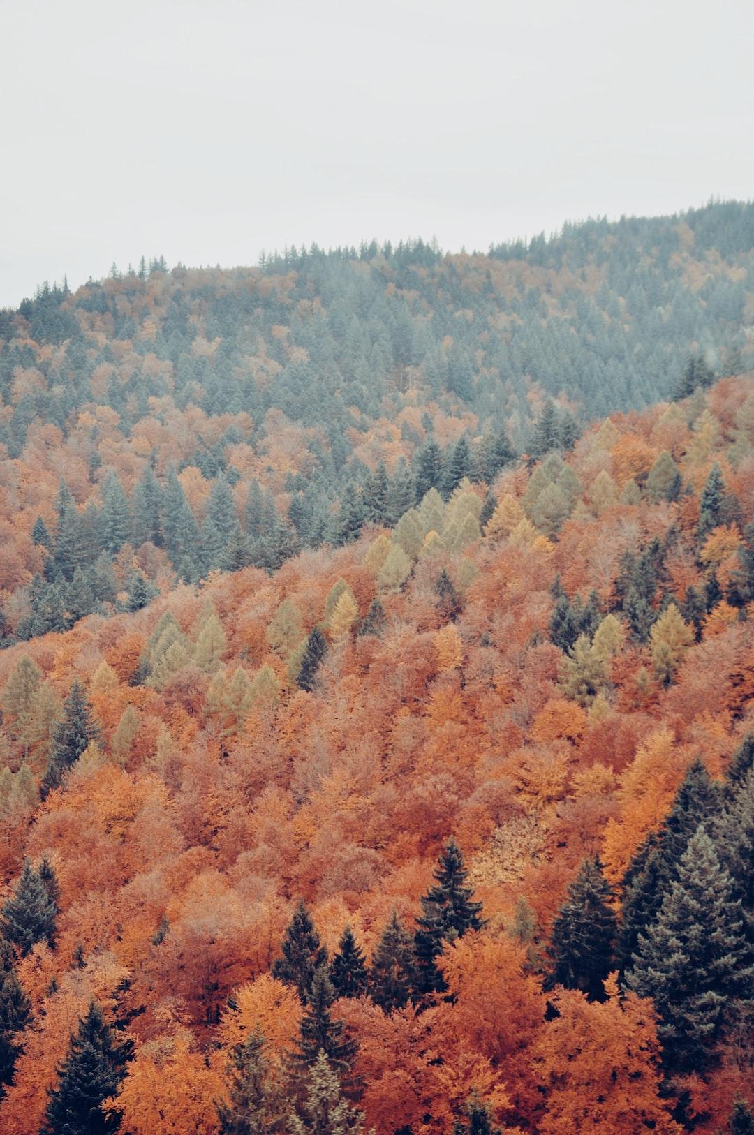 Black Forest texture