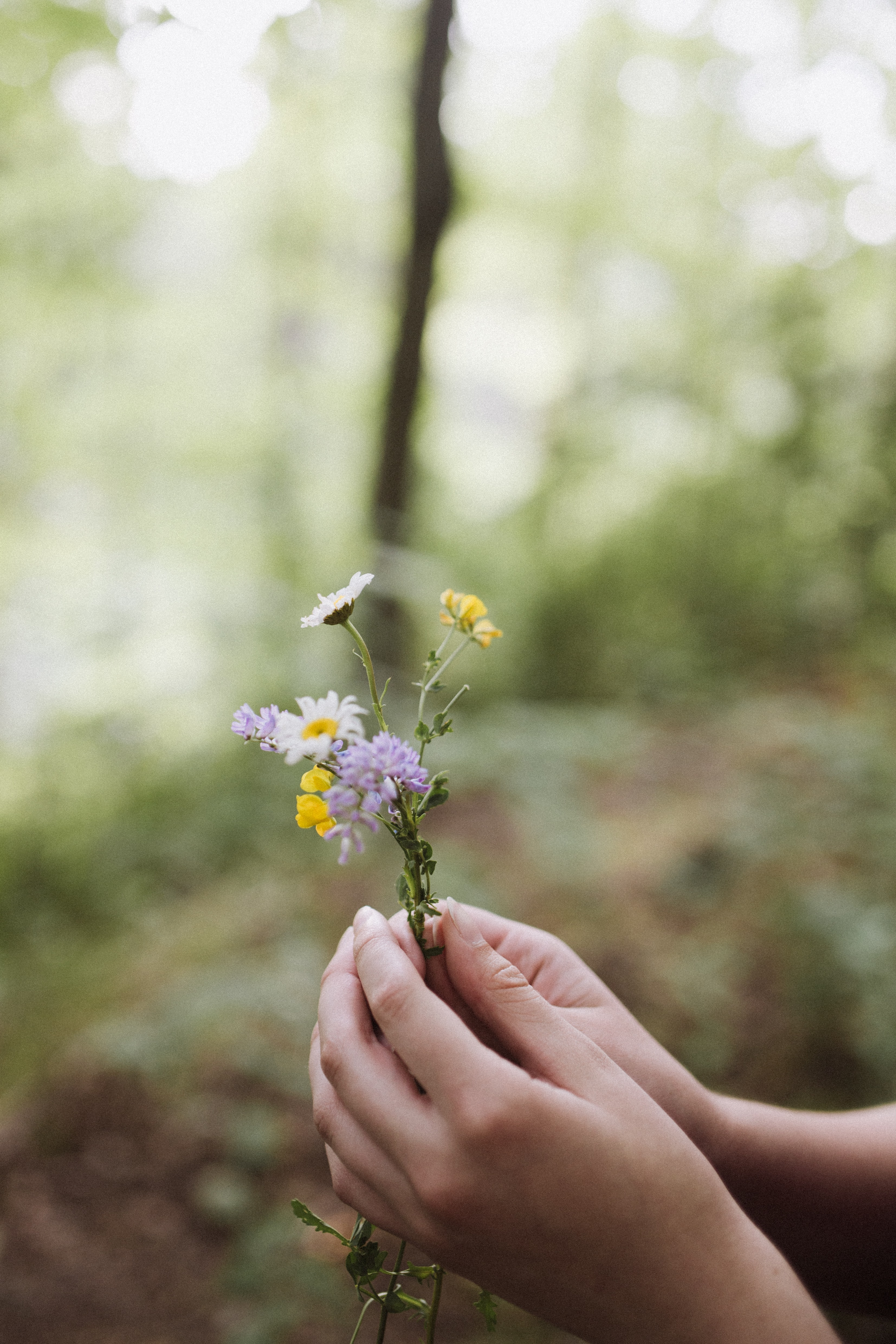 person holding purple and yellow flowers