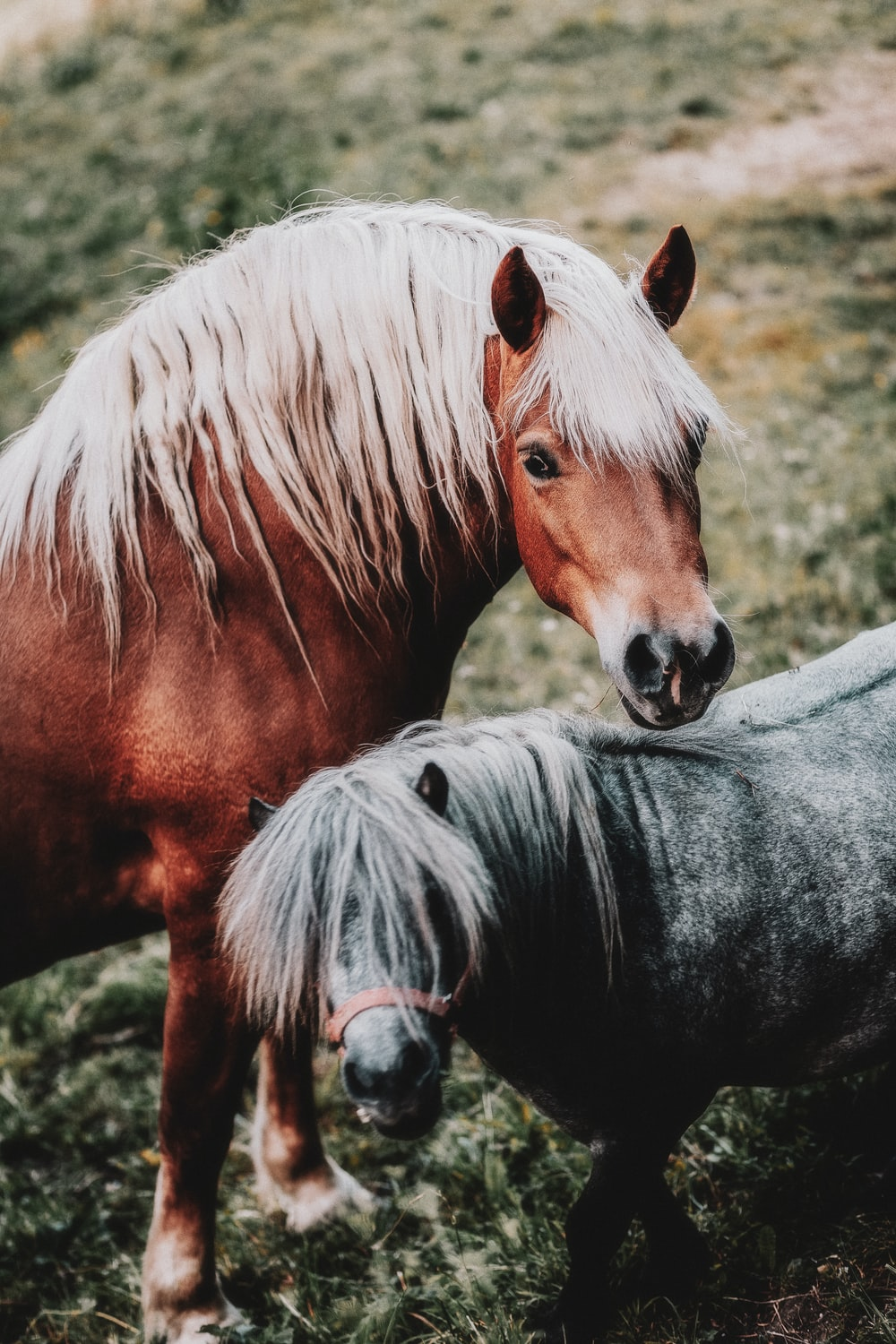 brown and gray horses together on grassland