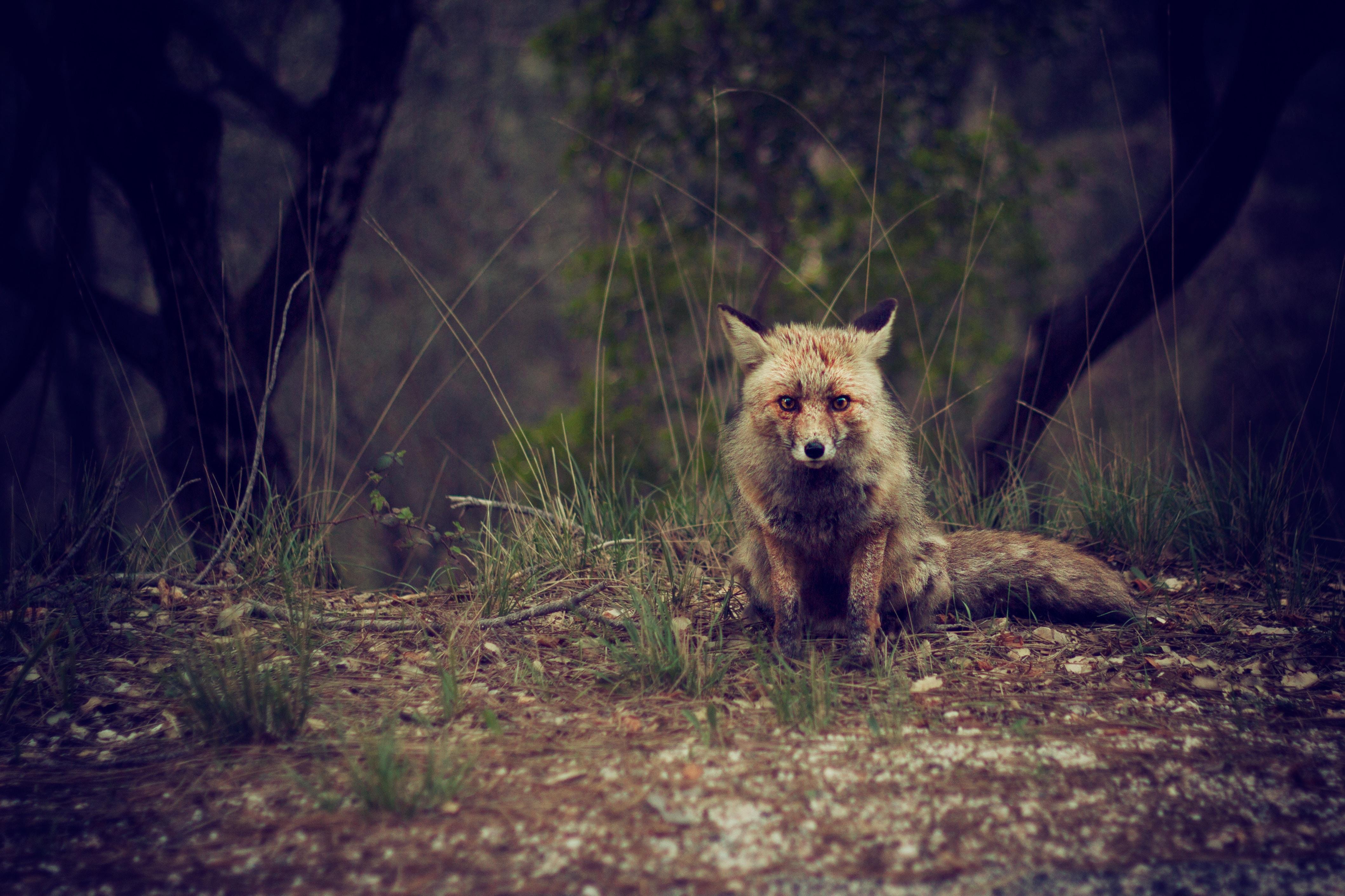 brown fox on ground at daytime