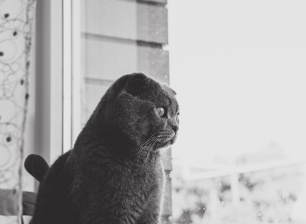 gray cat looking outside window
