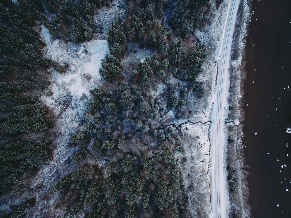 aerial photograph of pine trees covered with snow