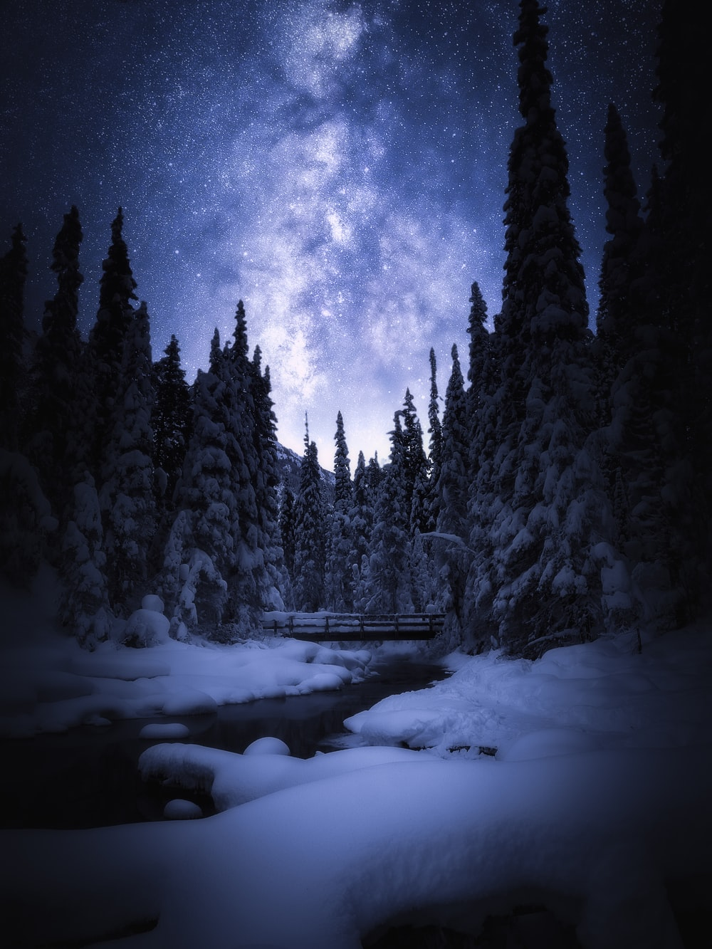 snow covered pine trees during nighttime