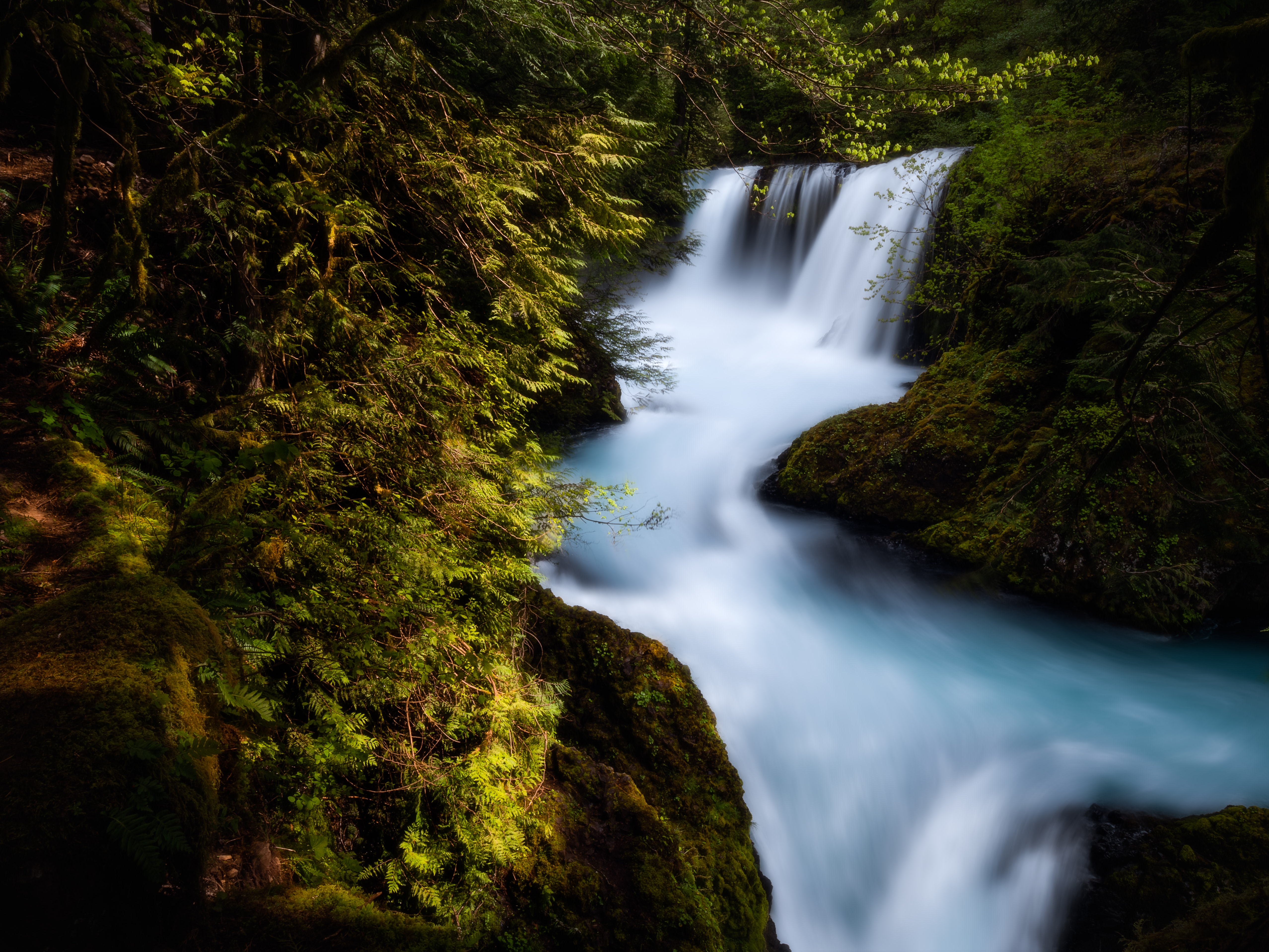 time lapse photography of river on forest