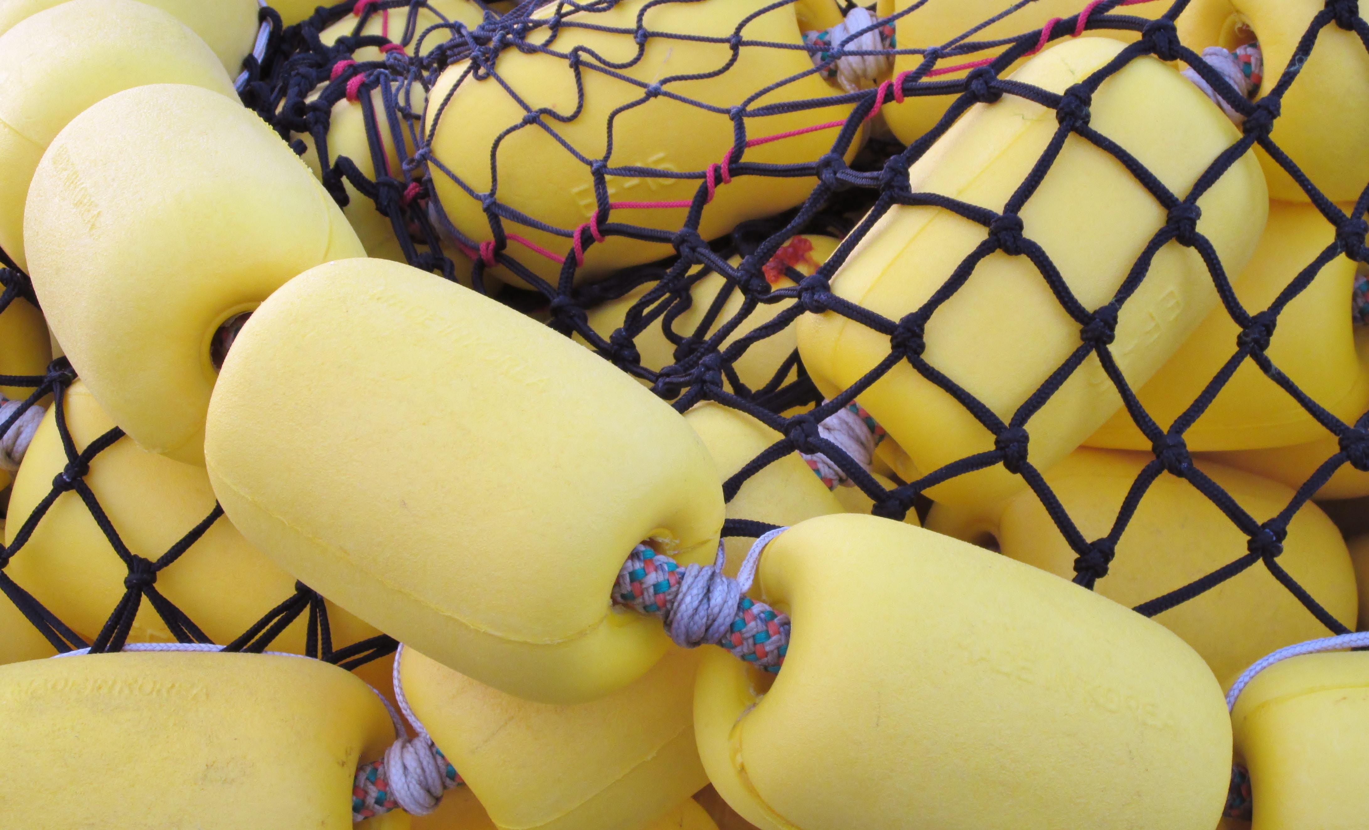 closeup photo yellow sponge with black net
