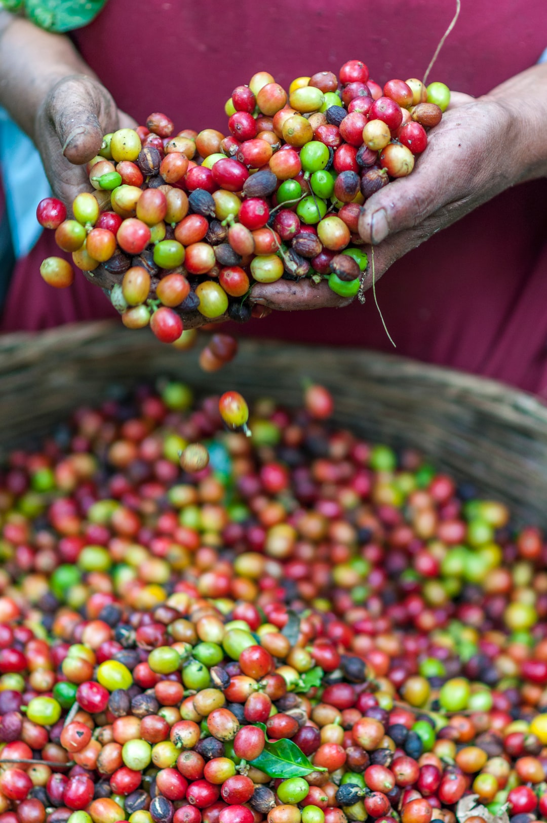 We strive to deliver unique & fresh coffees from around the world for a fair price that ensures resources are going back to the farms our coffees originate from