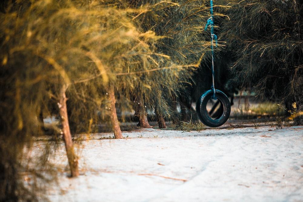 black wheel swing on seashore near trees