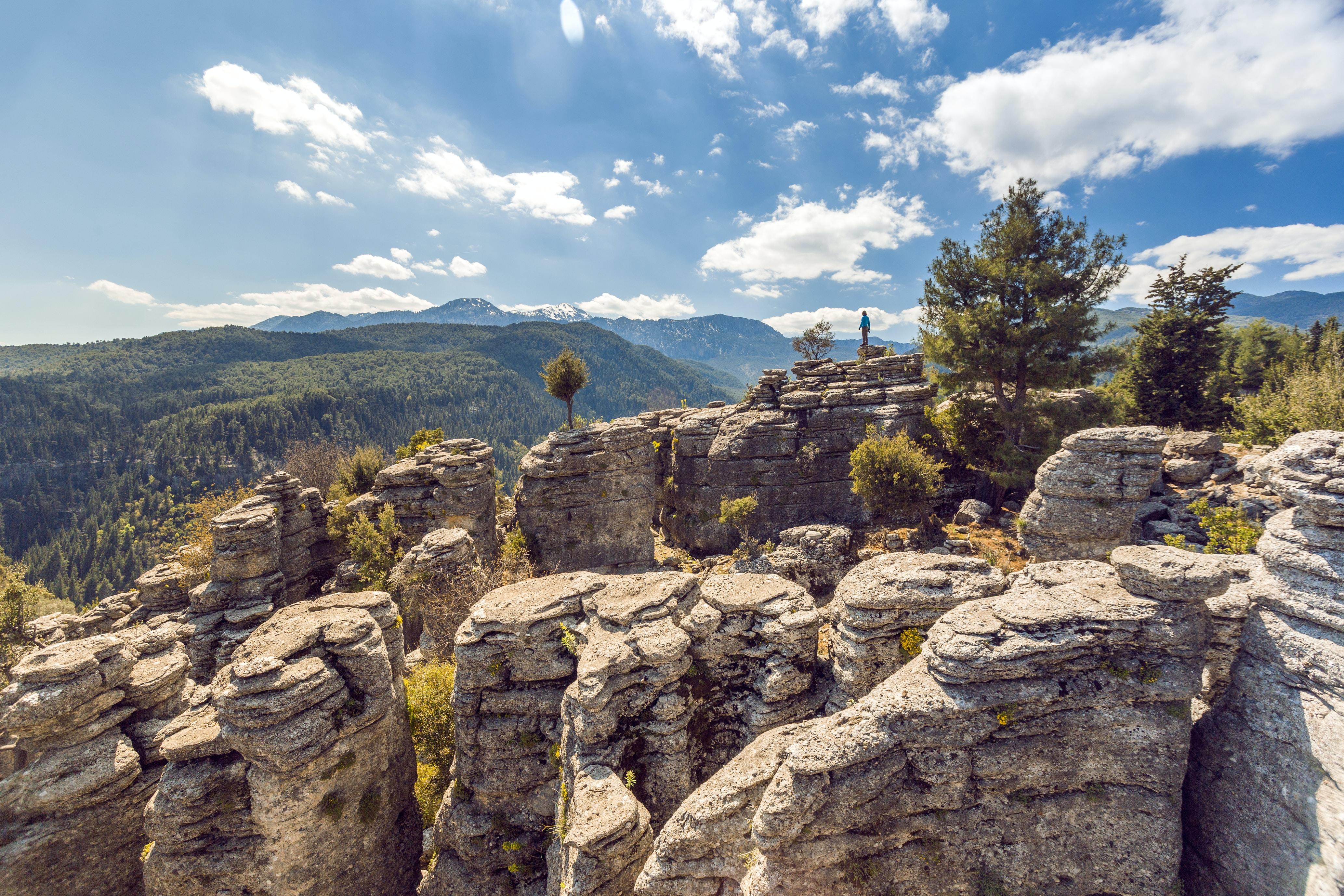 green trees on rock mountain