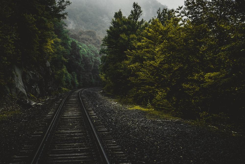 train trailway between trees