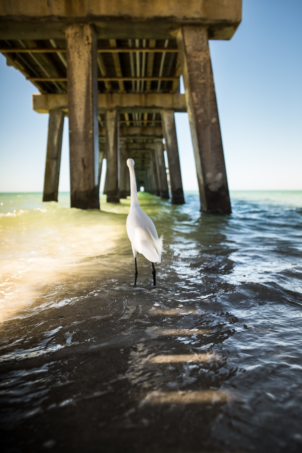 white bird standing on body of water under brown wooden port