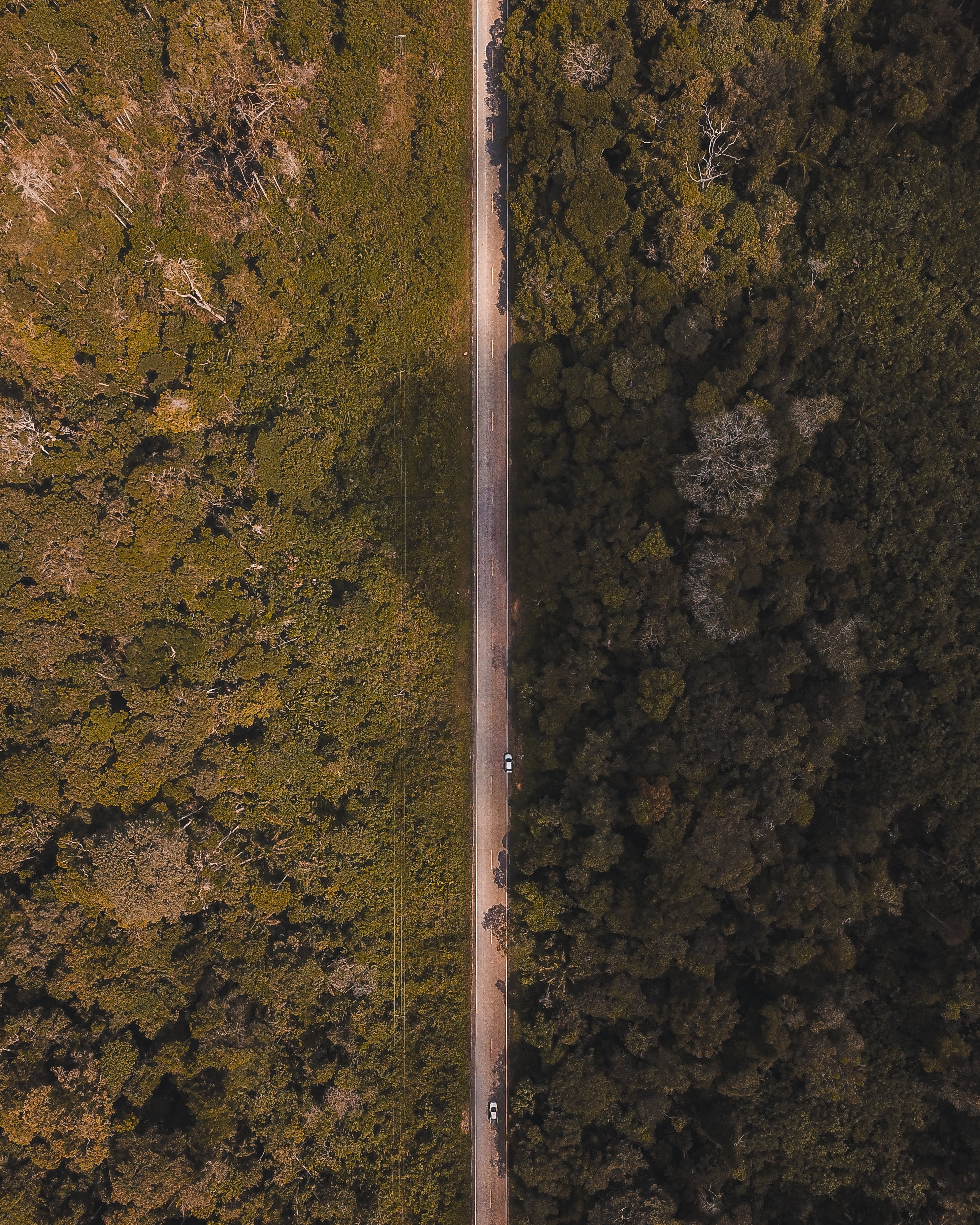 aerial photo of straight line road in the middle of forest