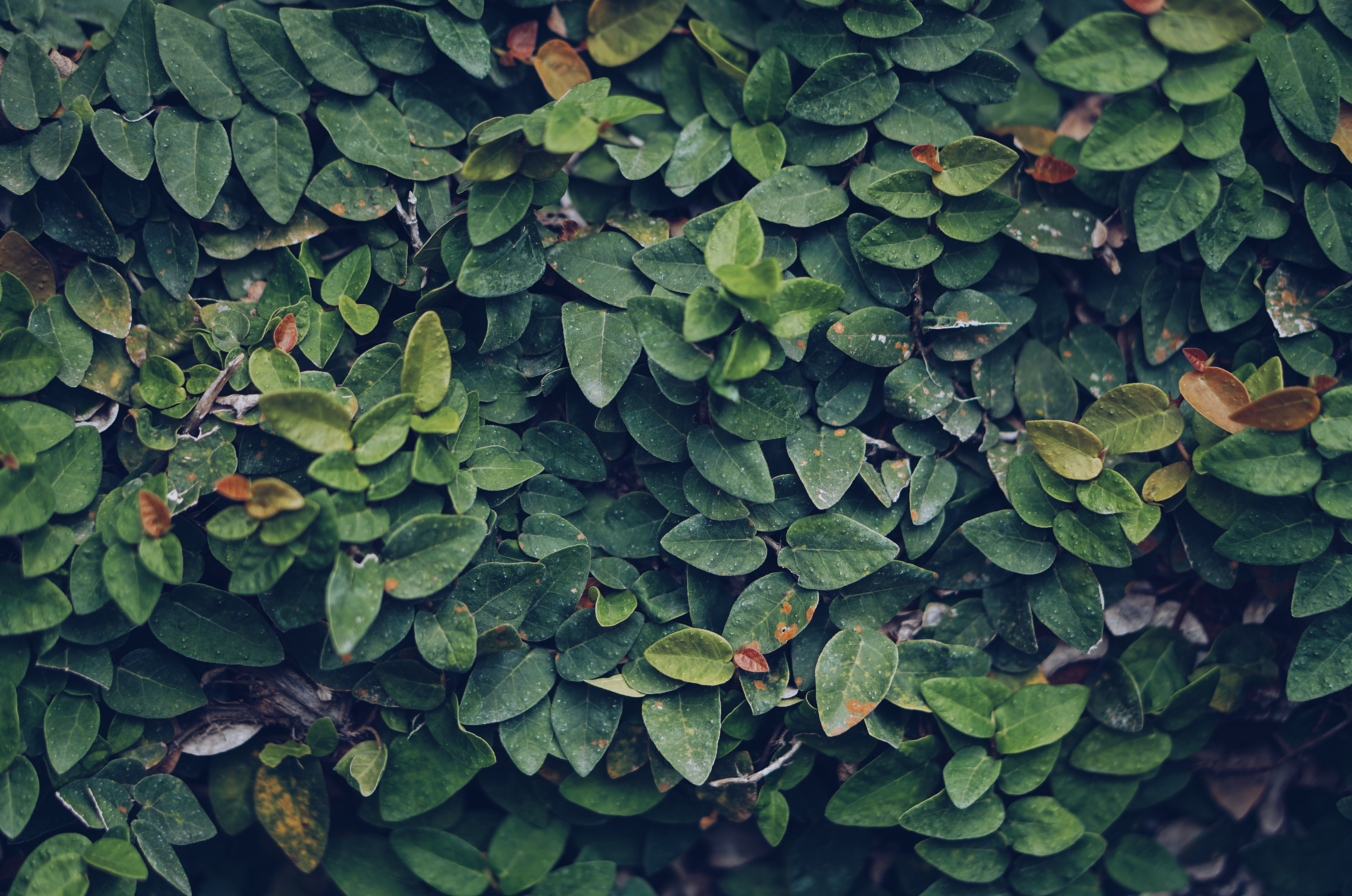 photo of green leaves