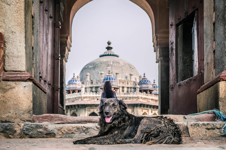 black and brown dog lying on ground