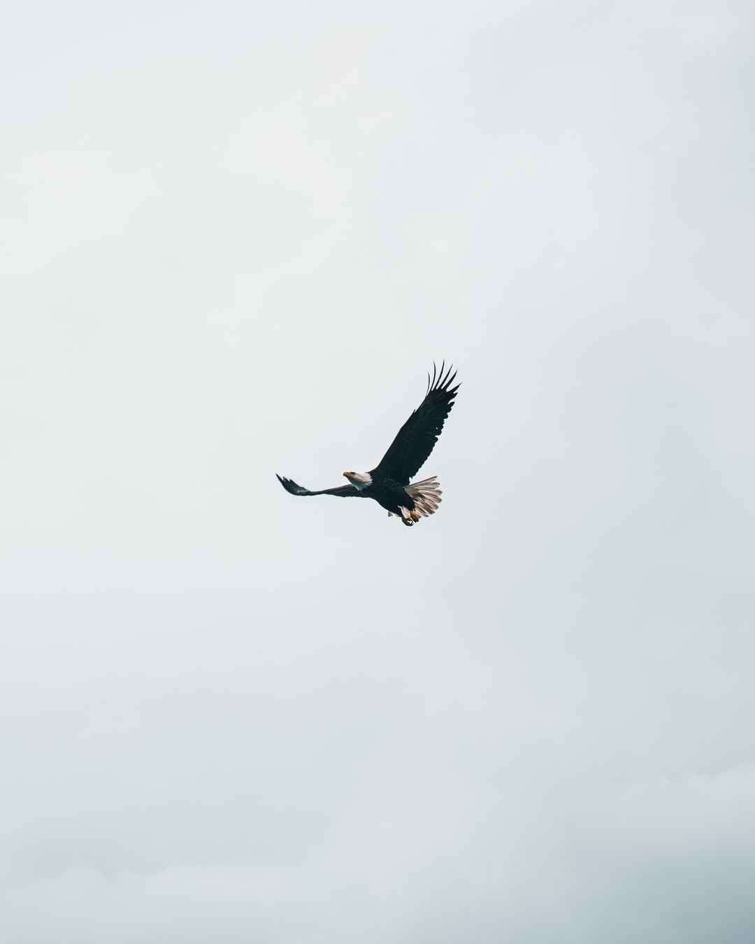 Eagle on the Way