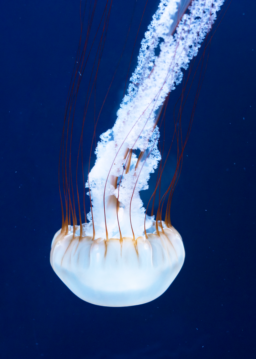 white and brown jellyfish on water