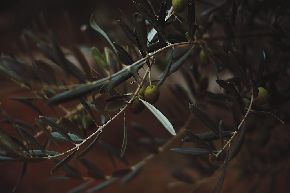 tilt shift photography of green fruit