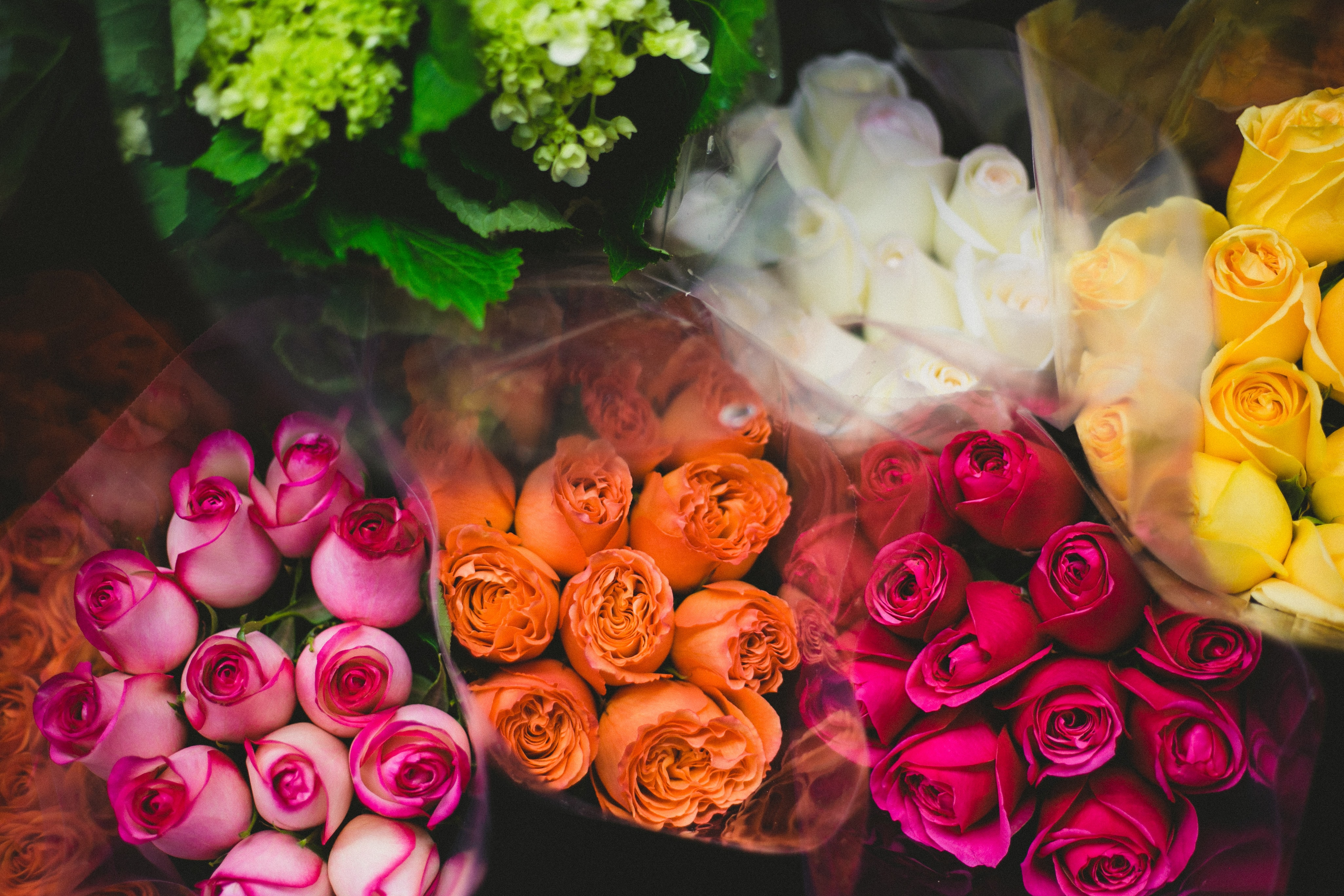 flat-lay photography of rose bouquets