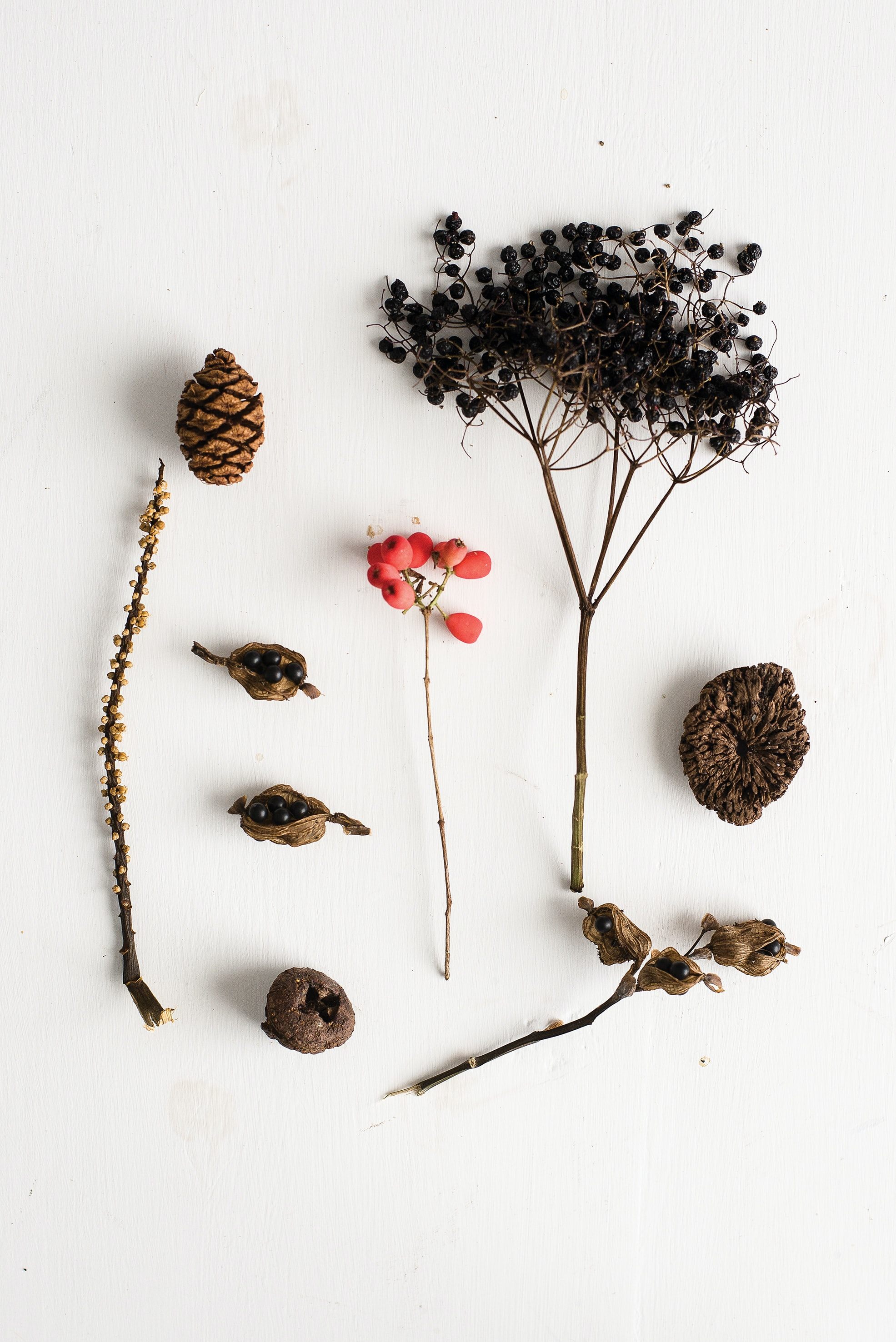 pine cone and dried pepper seeds