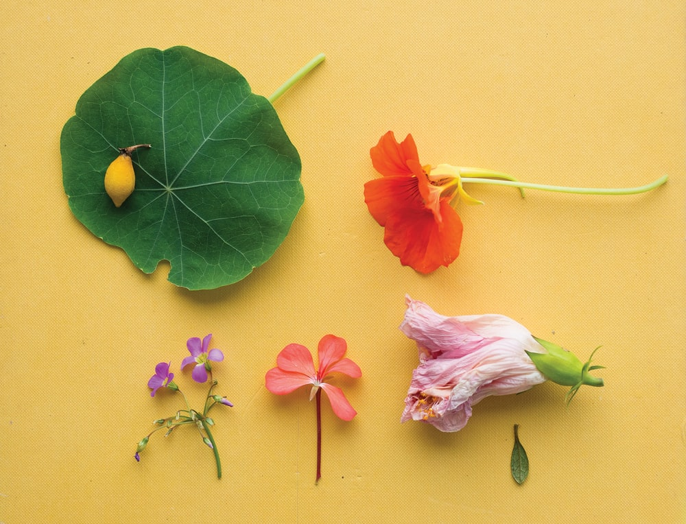 assorted flowers on yellow surface