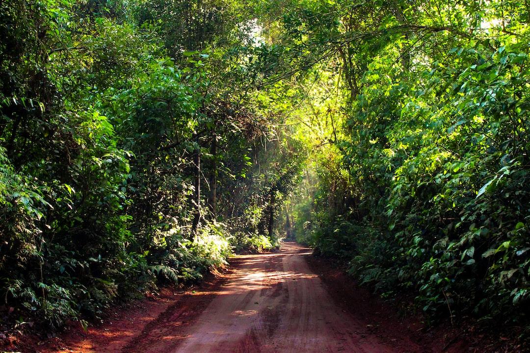 No vayas a donde te lleve el camino, ve a donde no haya camino y crea un nuevo sendero.