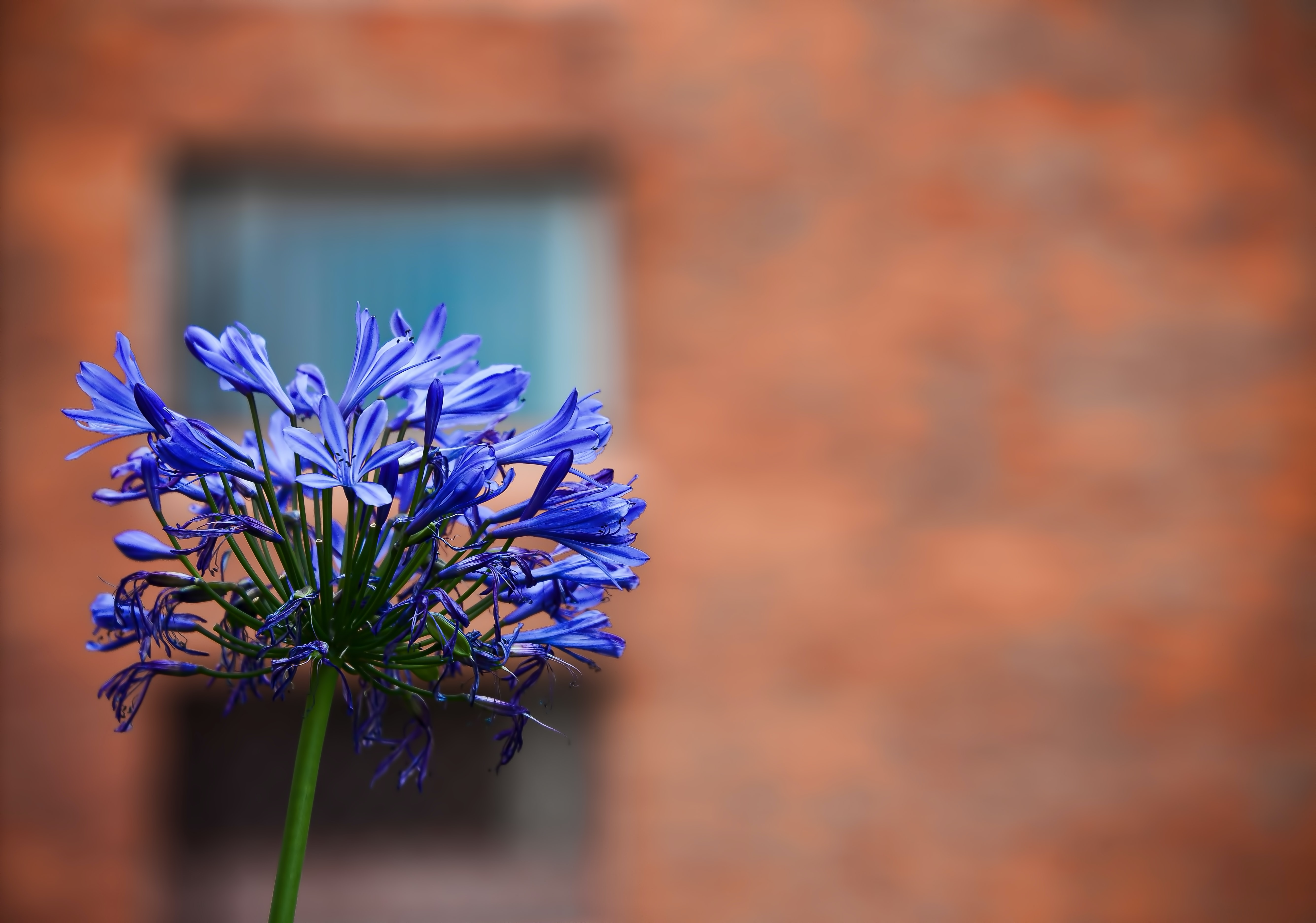 blue flower plant blooming during daytime