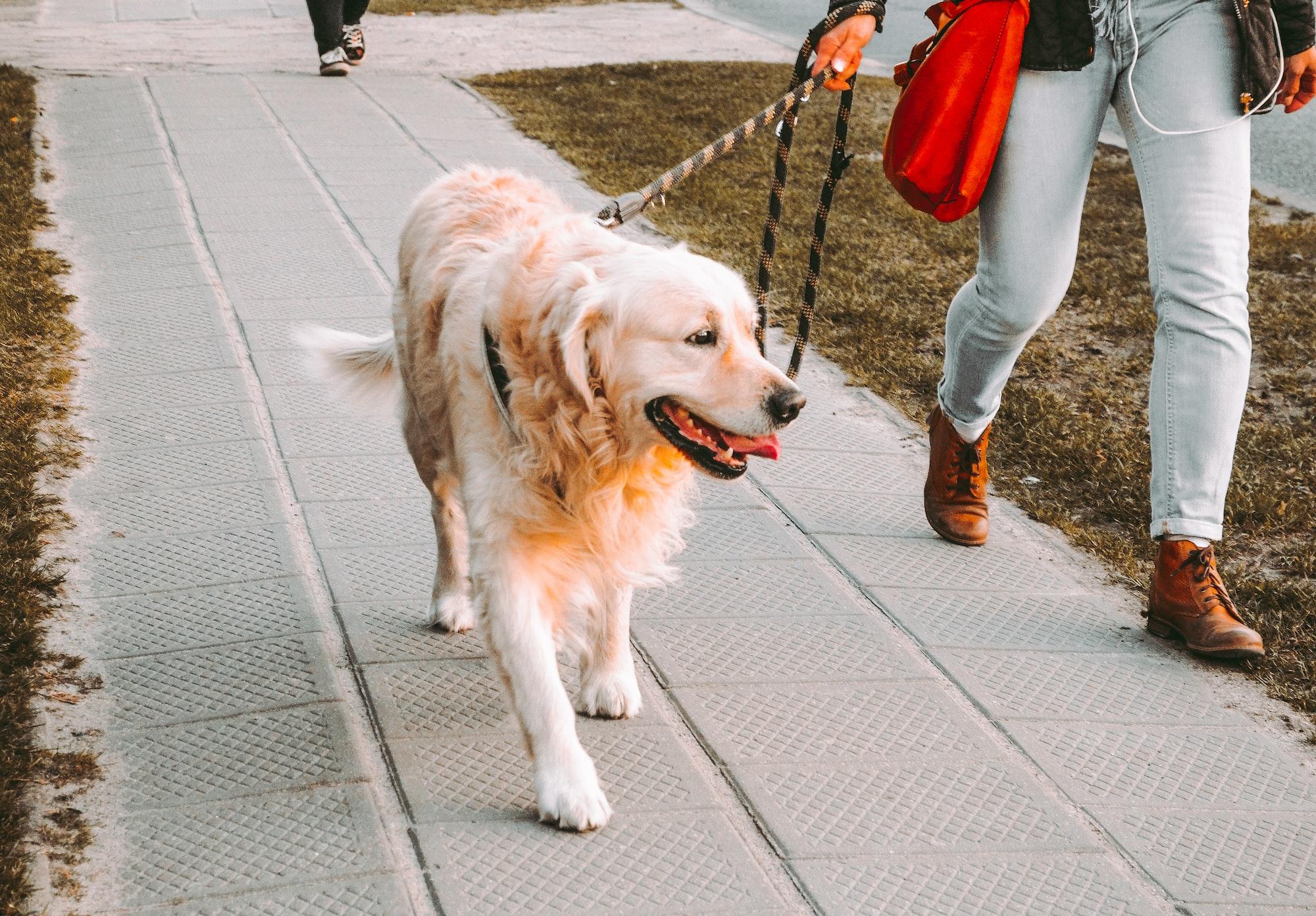 Insegnare al cane a camminare al guinzaglio
