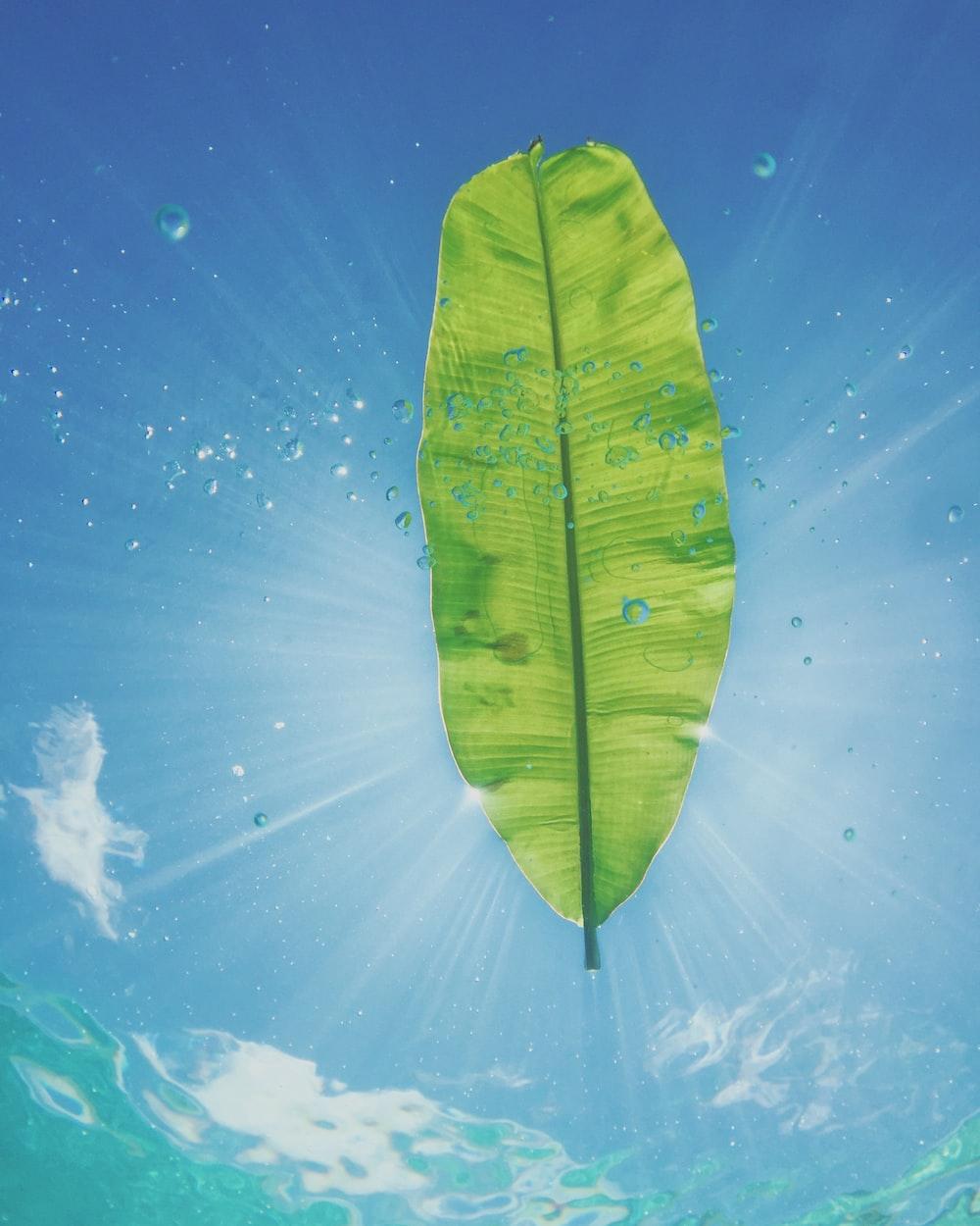 banana leaf with sun rays digital wallpaper
