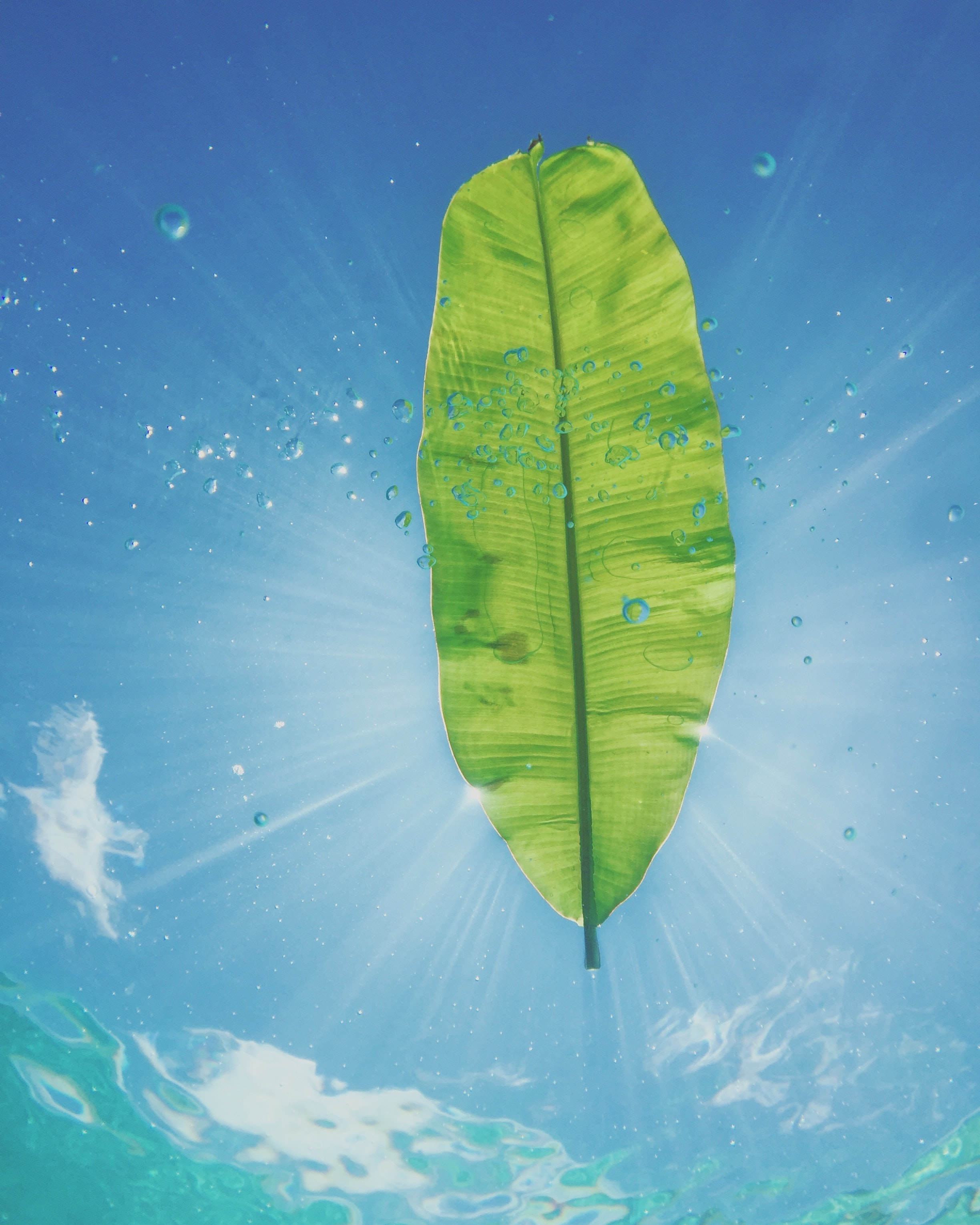 banana leaf with sun rays digital wallpaper