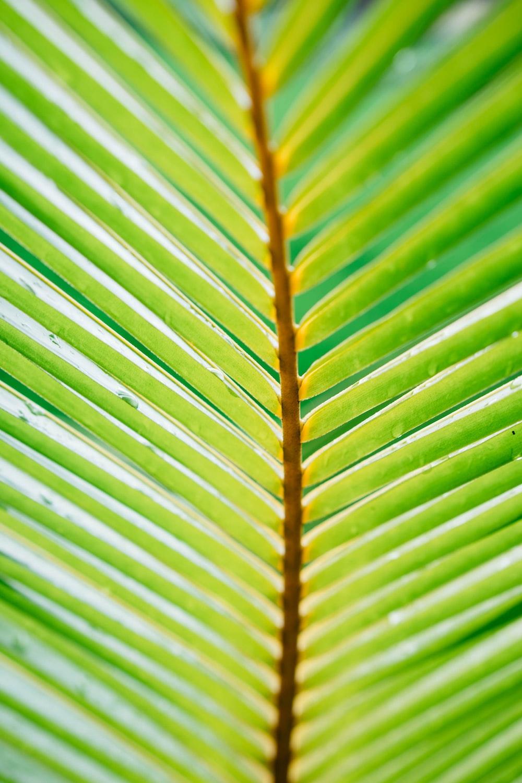 green linear leaf plant