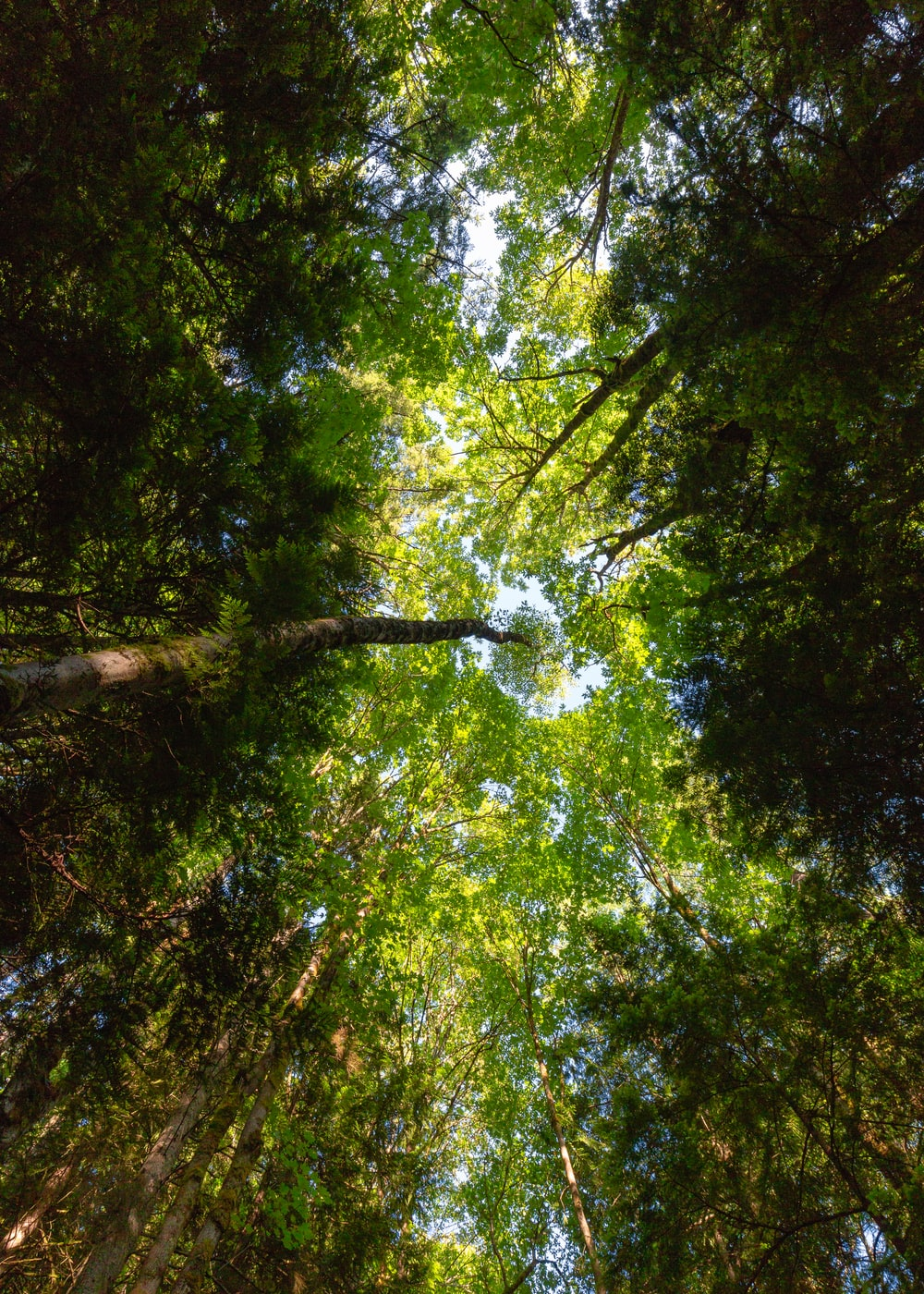 low angle photo of green leafed trees