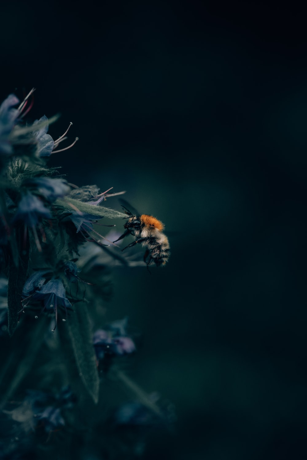 black and orange honeybee on flowers in shallow focus photography