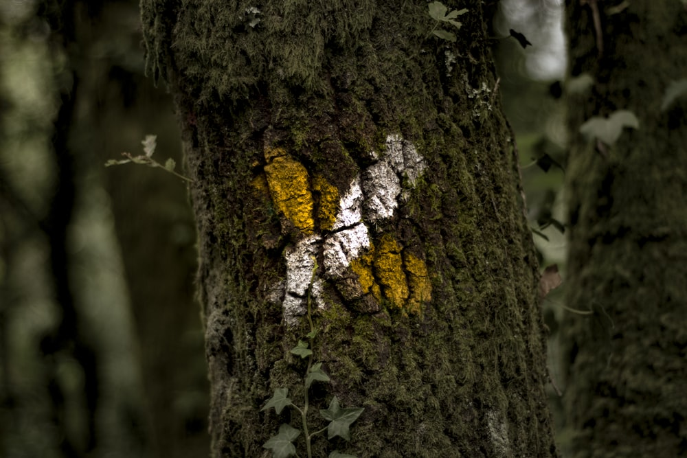 yellow and white x mark on tree bark