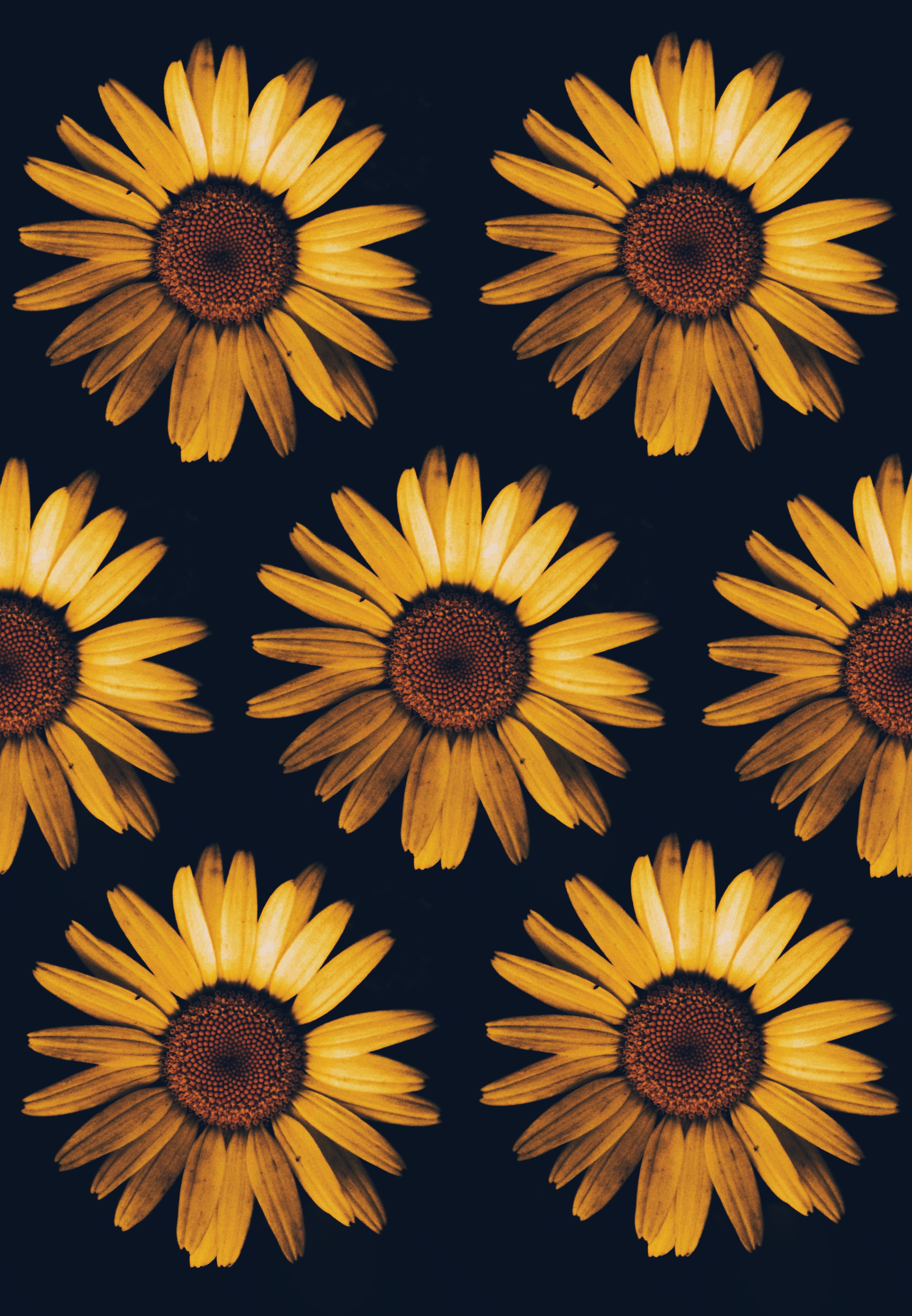 20  sunflower pictures  hq