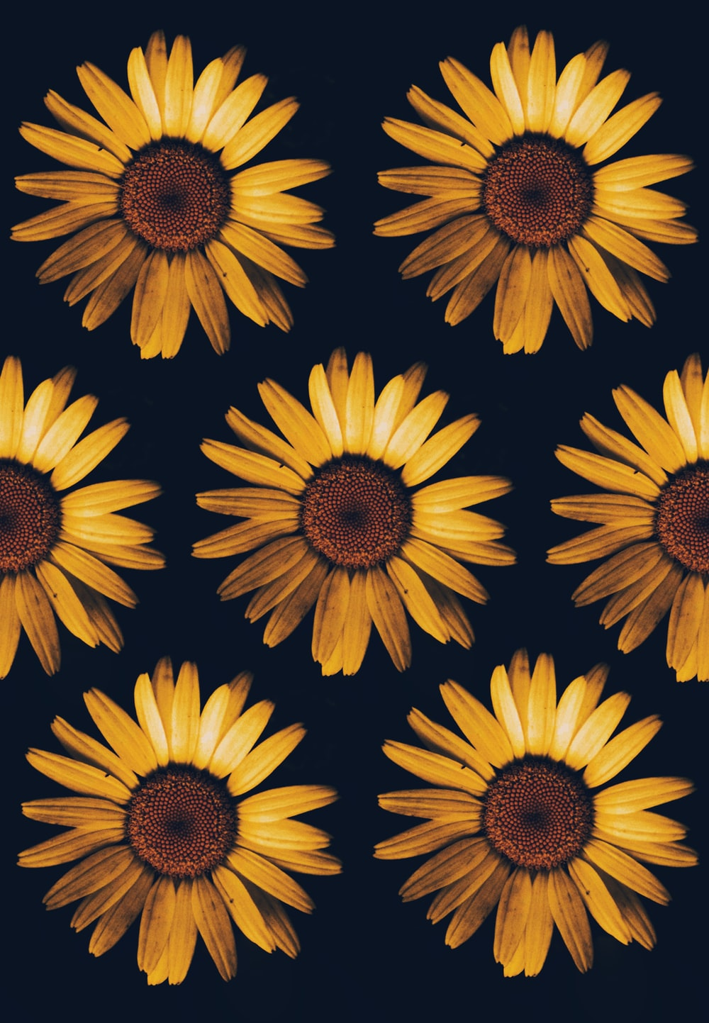 Sunflower Wallpapers Free Hd Download 500 Hq Unsplash