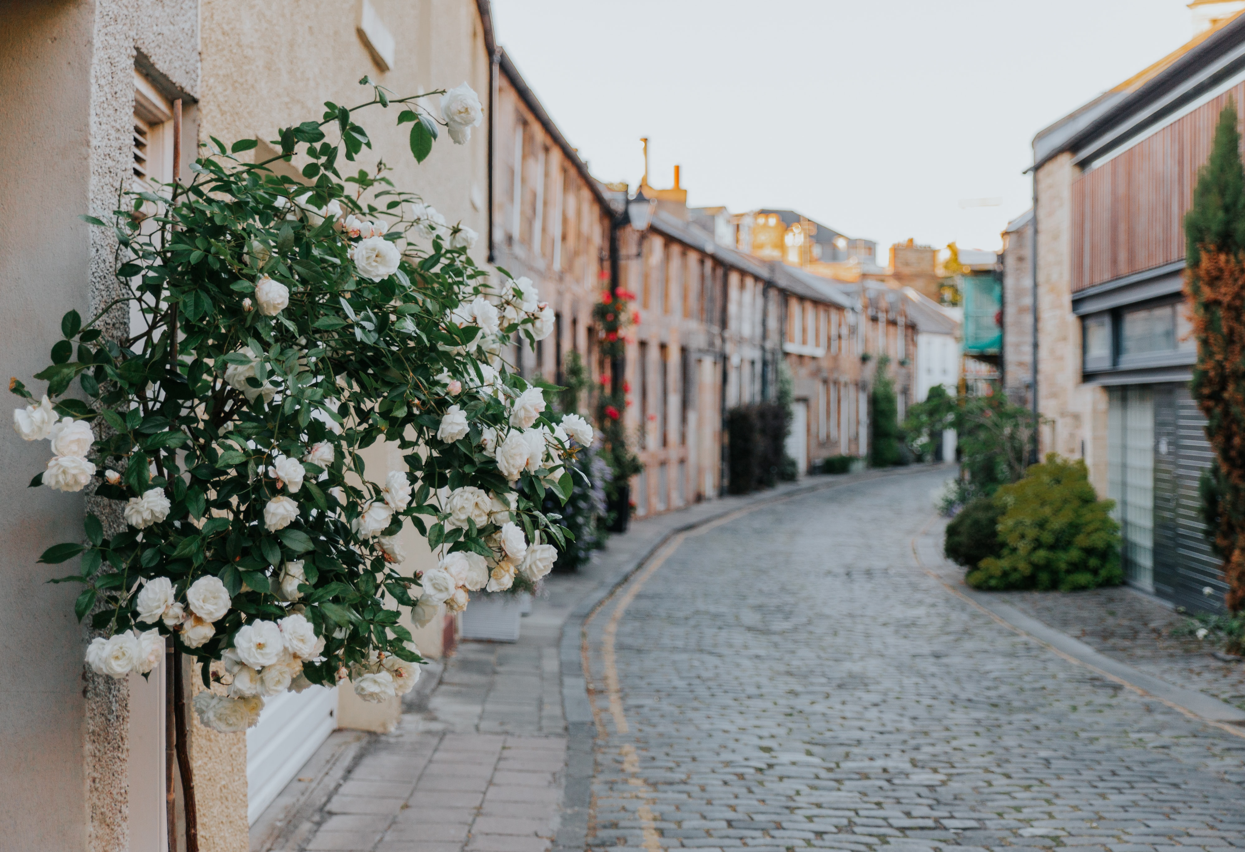 alley between village with flowers