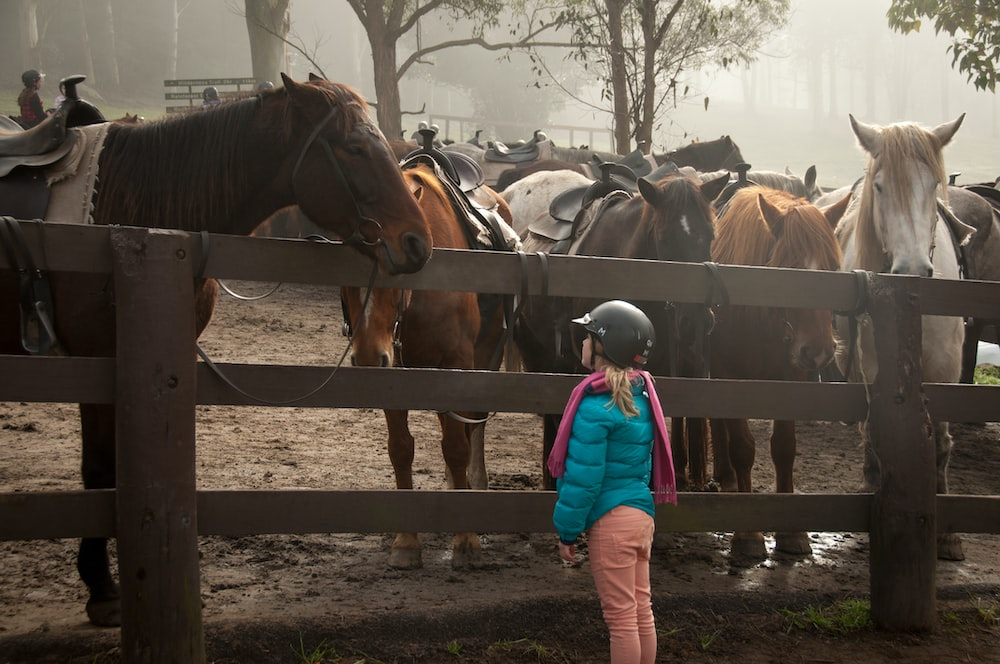 girl standing in front of group of horses