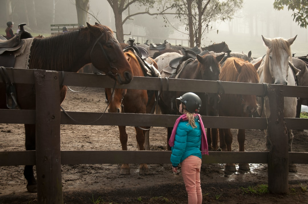 A girl and a horse become friends