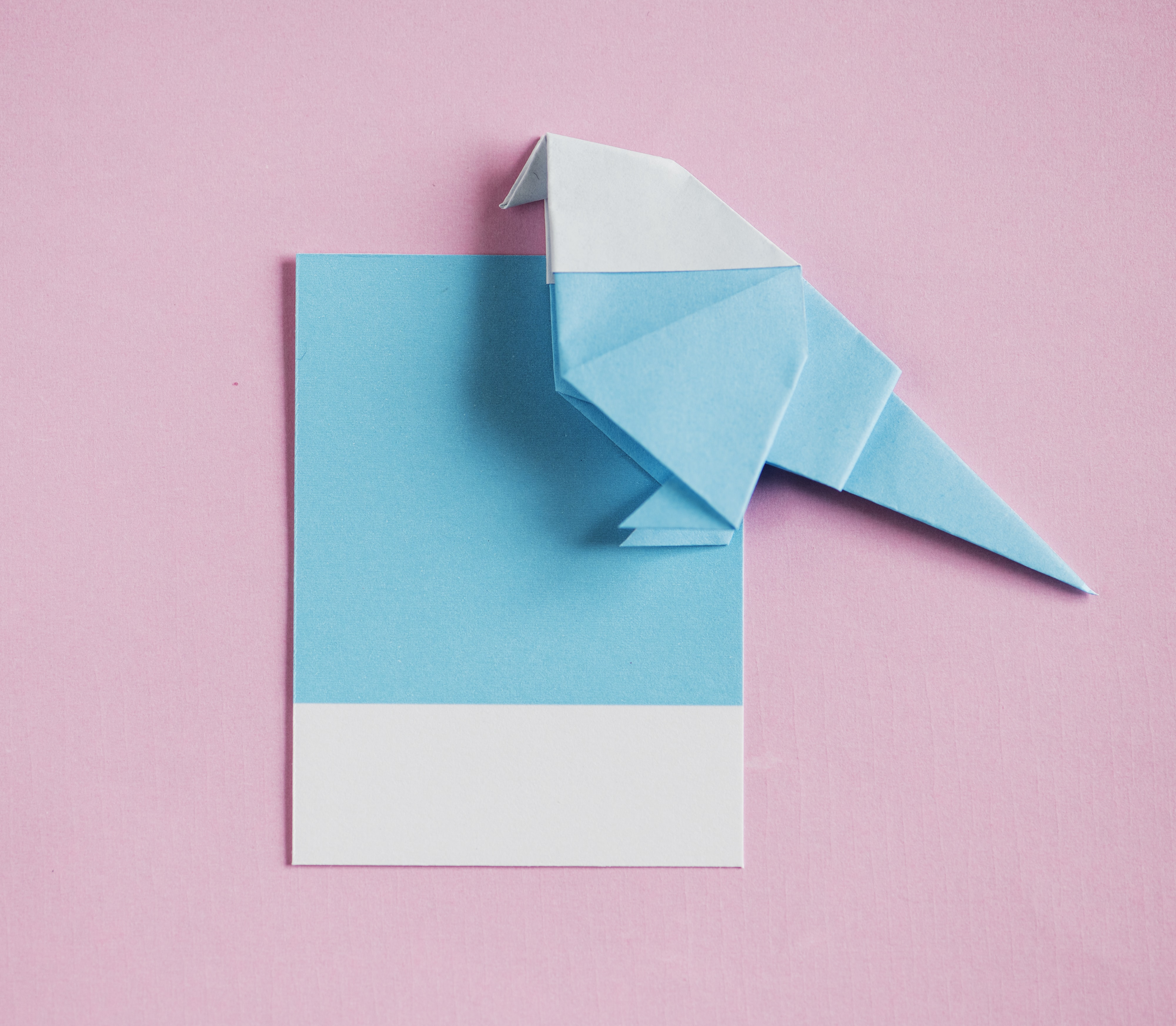 blue-and-white papers on pink surface