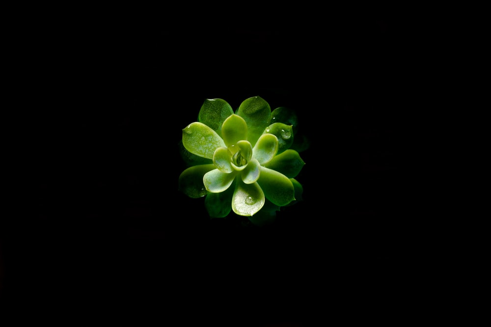closeup photography of green succulent plant