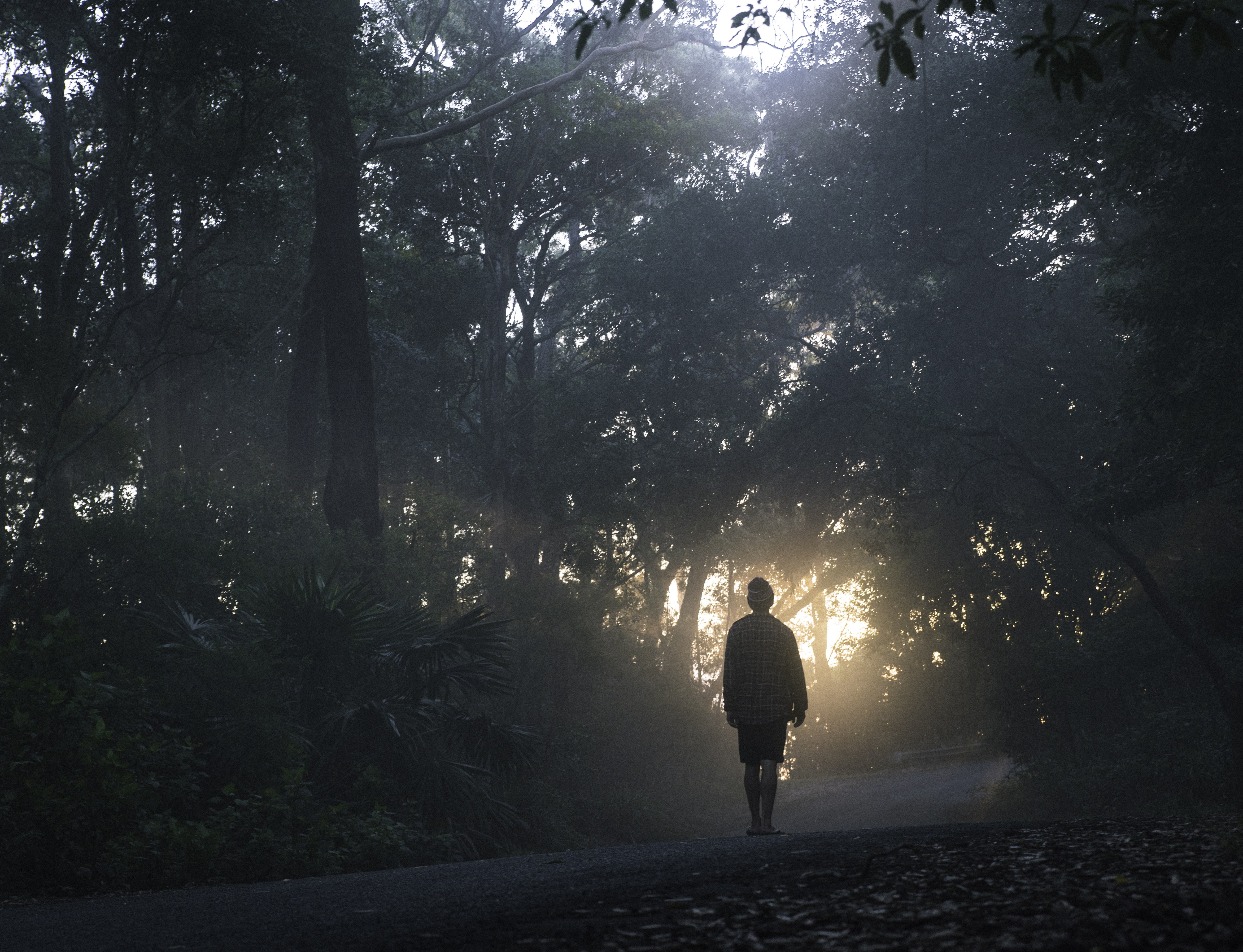 person walking on street between forest