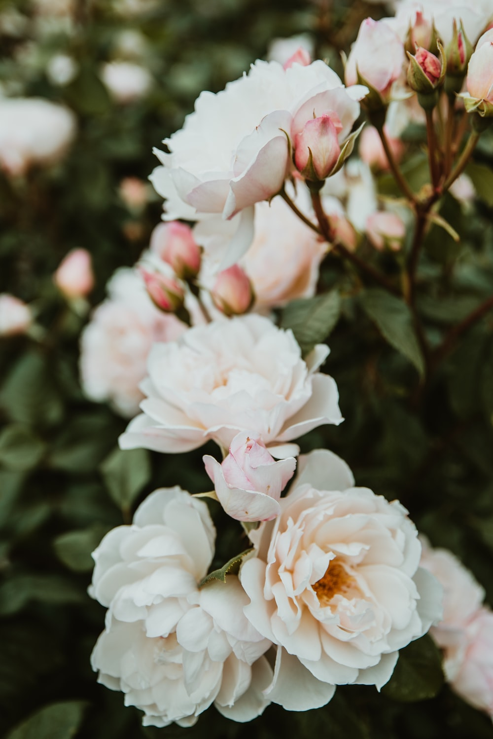 white and pink flowering plants