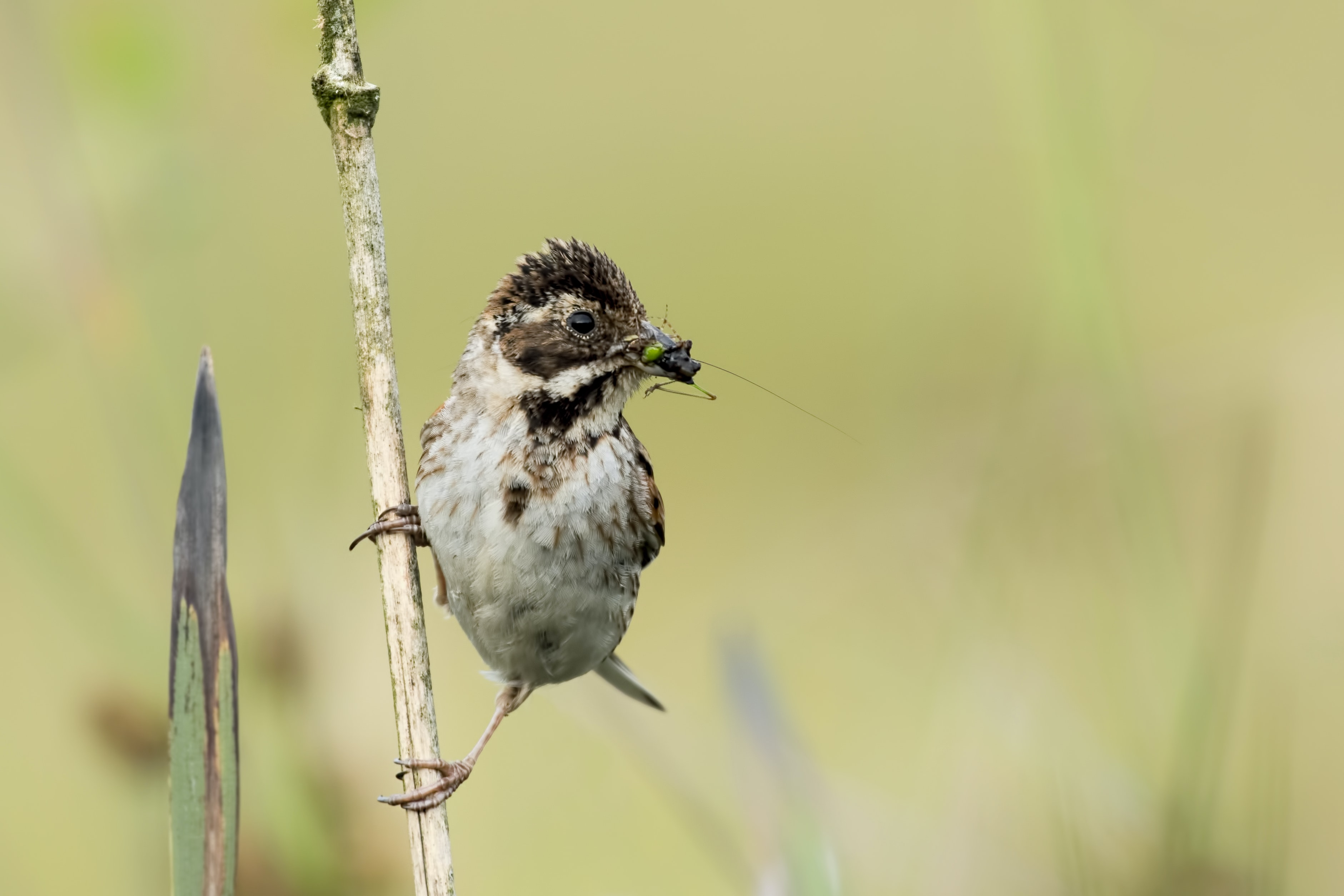 wildlife photography of bird catches a bug while perching on a twig