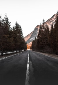 concrete road between tall trees facing mountain