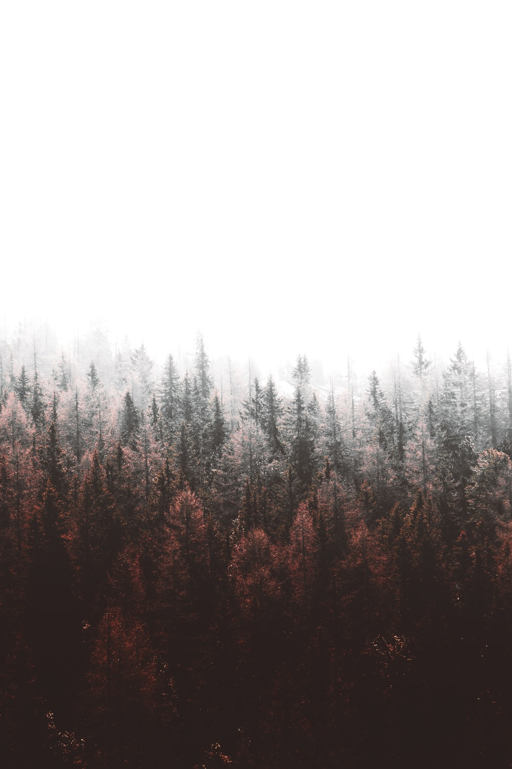 September pictures download free images on unsplash - Pine tree wallpaper iphone ...