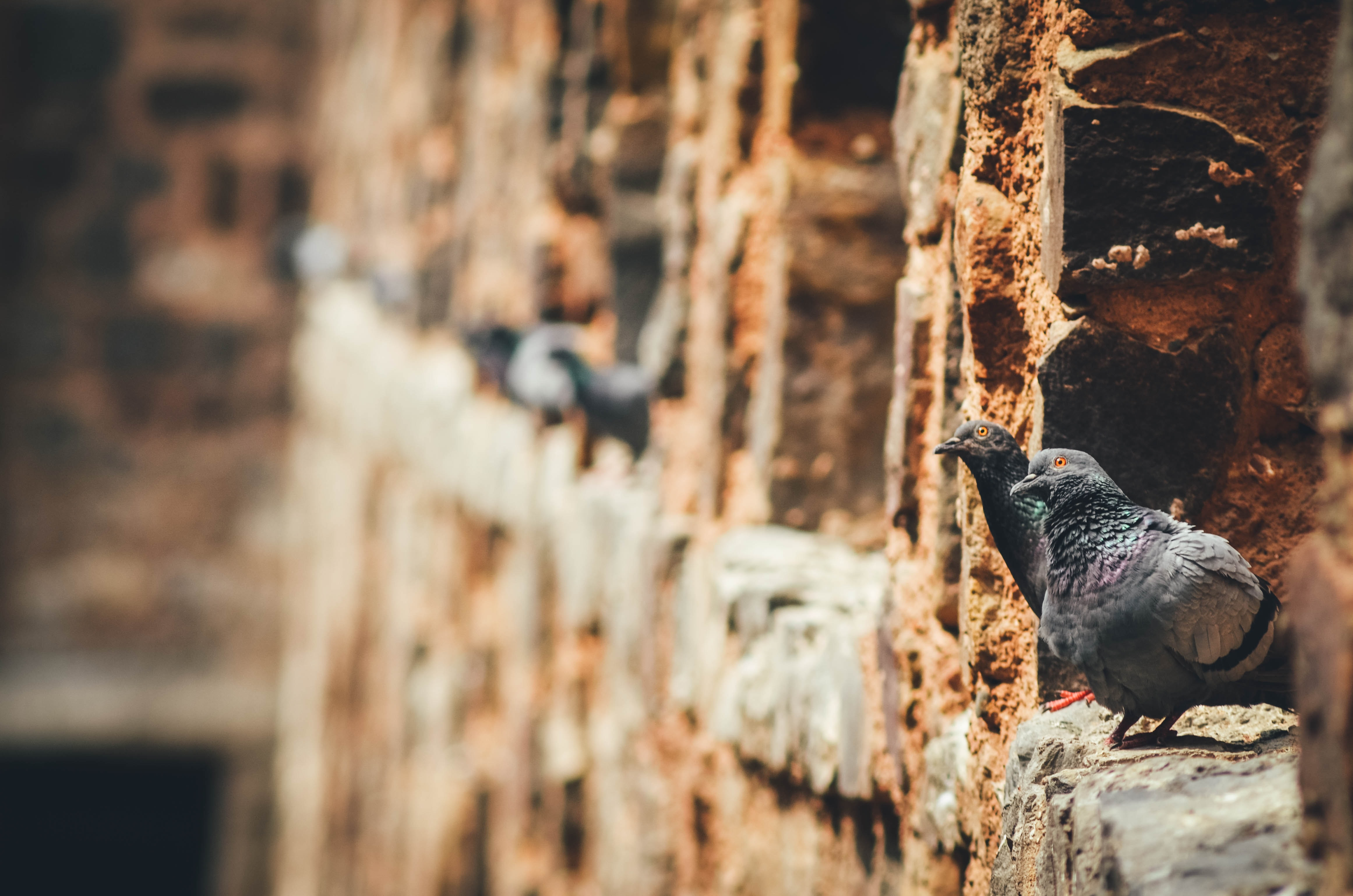 gray pigeons on brown rock wall
