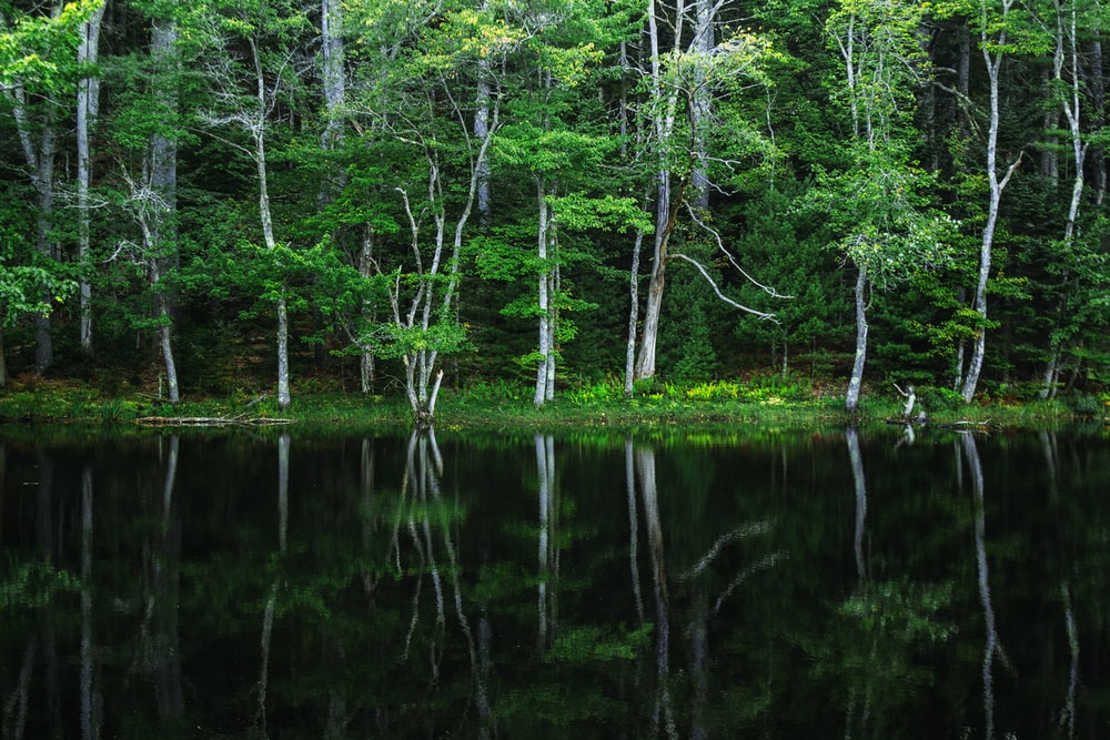 green leafed trees near body of water