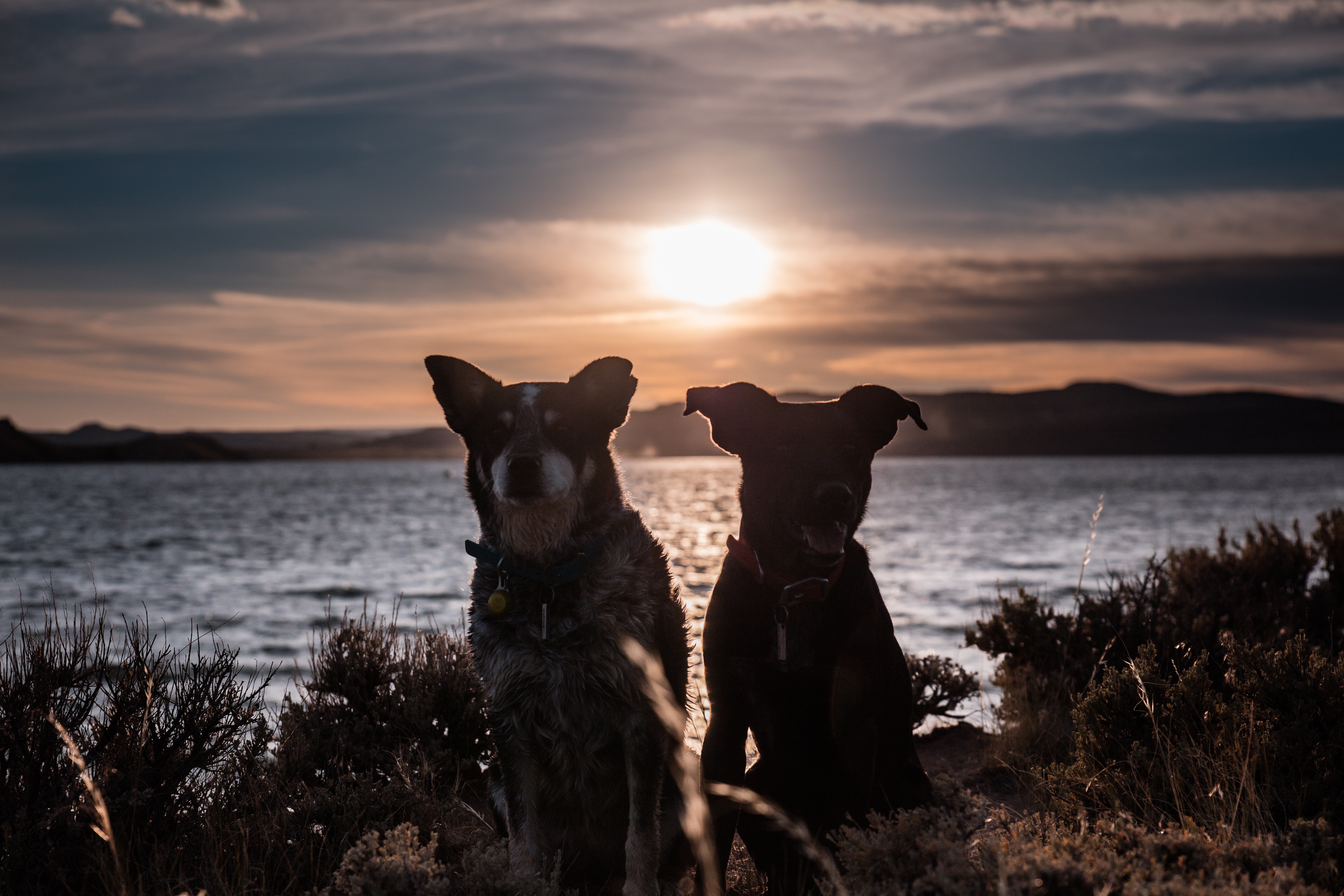 two dogs standing beside each other