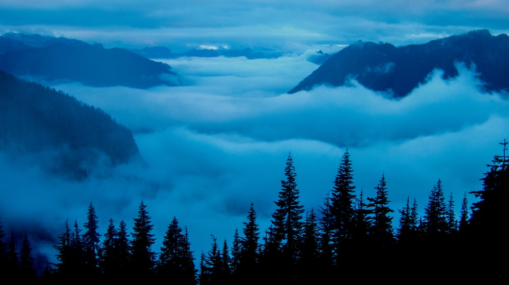 mountains covered with fogs near trees